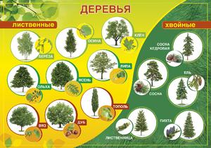 какие бывают деревья названия и фото
