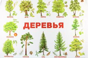 фото деревья россии фото и названия