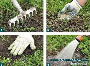 Как сеять газонную траву весной