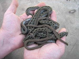 Способы избавления от змей