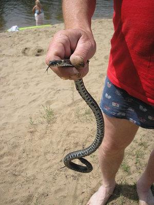 Методика отпугивания змей с дачных участков