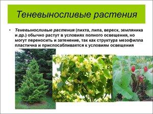 Садовые растения теневыносливые