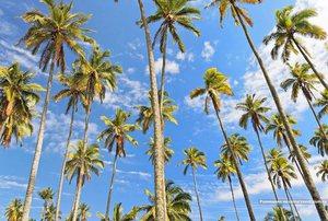 Побережье с пальмамаи